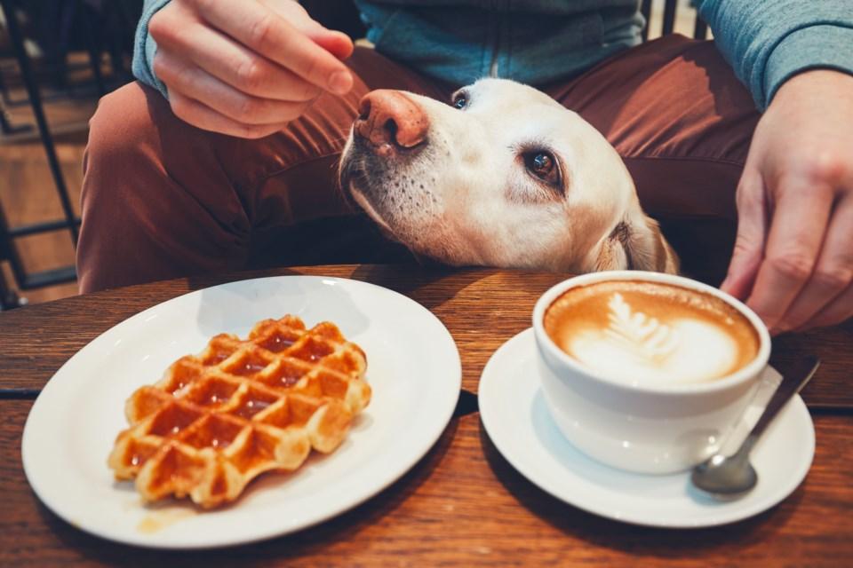 dog and coffee