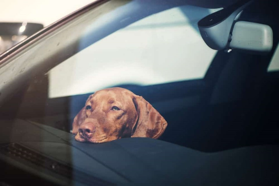 dog-hot-car-feature