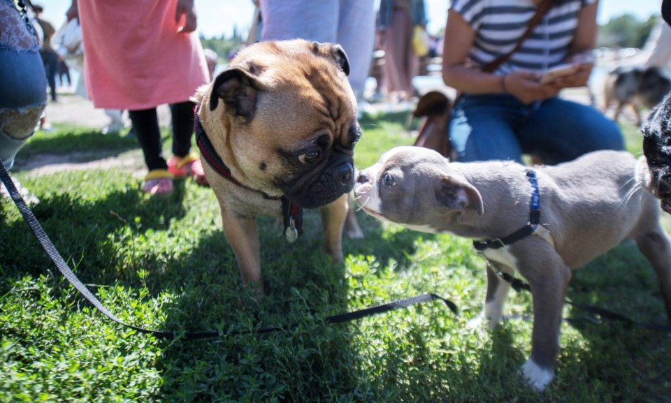 dog meet up 1