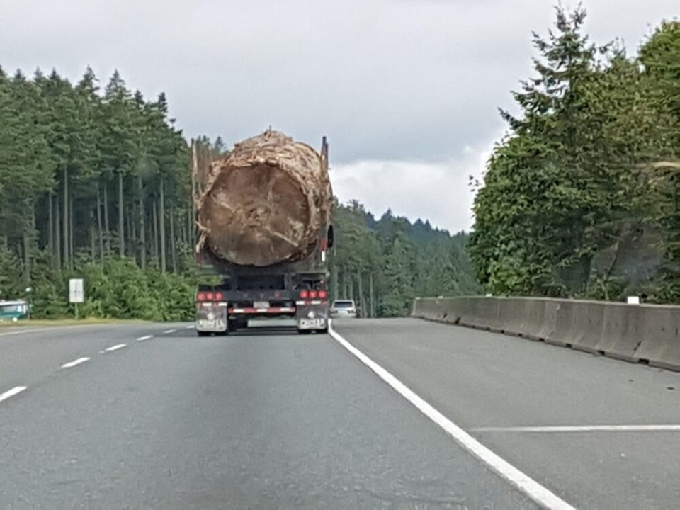 old-growth highway