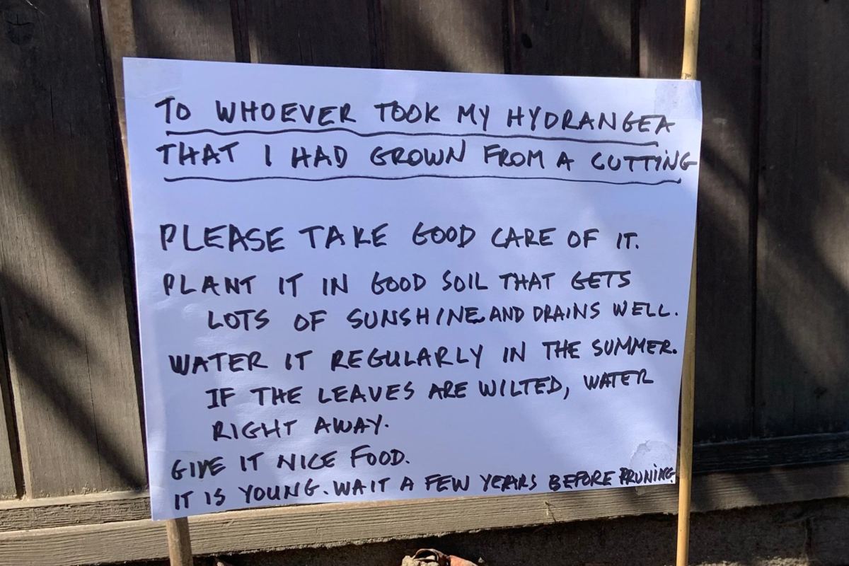 'Please take good care of it': Gardener leaves wholesome note for hydrangea thief