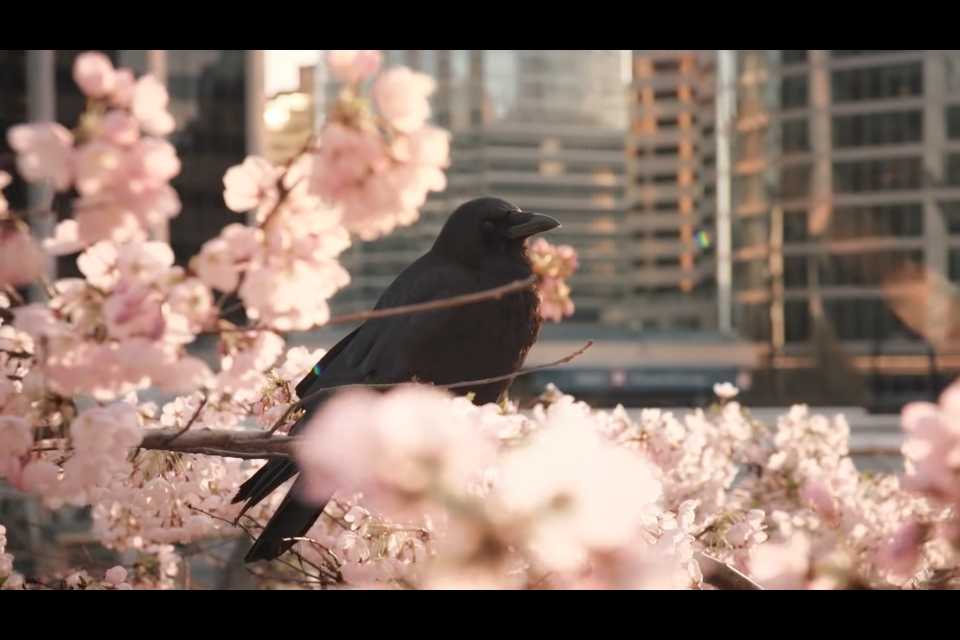 Stunning screen captures from the amazing cherry blossom video.