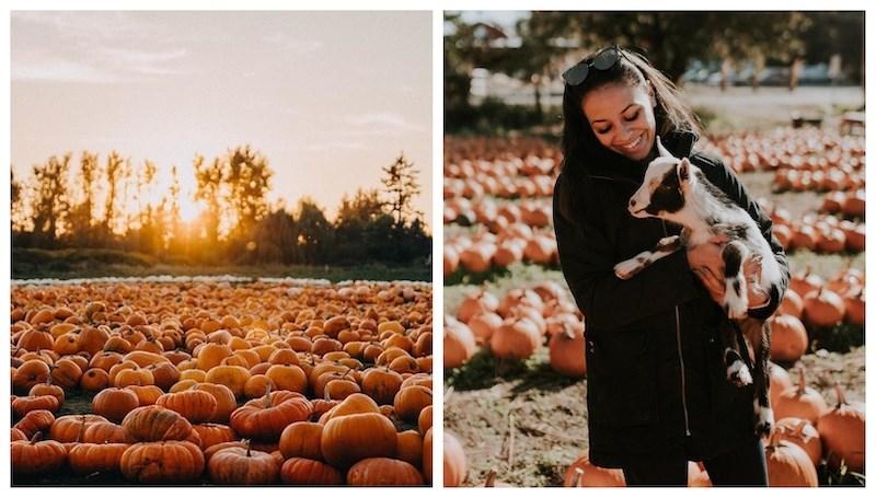 maan-farms-fall-festival-september-2021