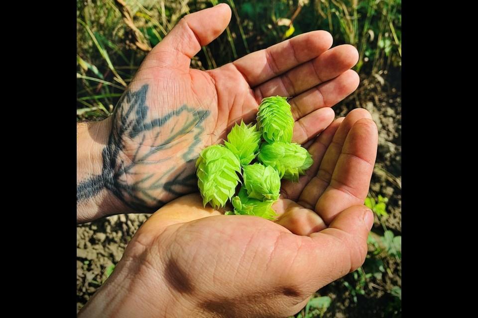 Brewer Azlan Graves holding fresh hops.