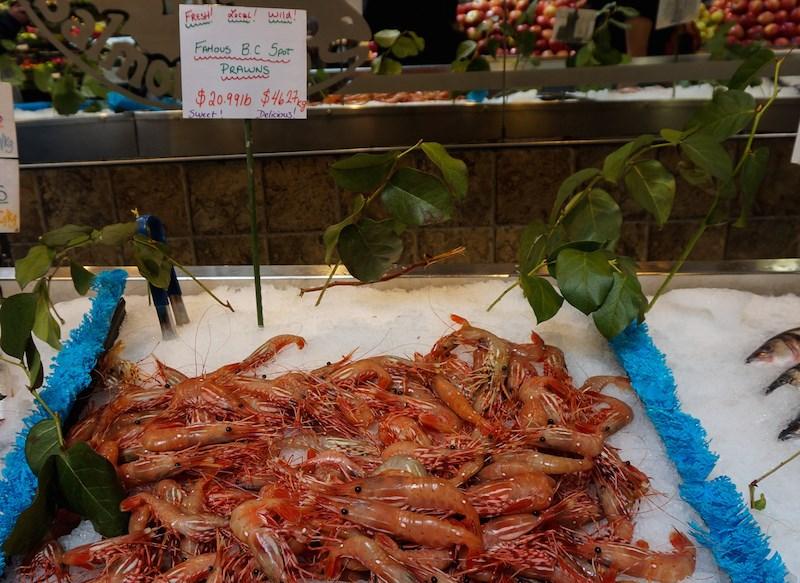 bc-spot-prawns-sold-vancouver
