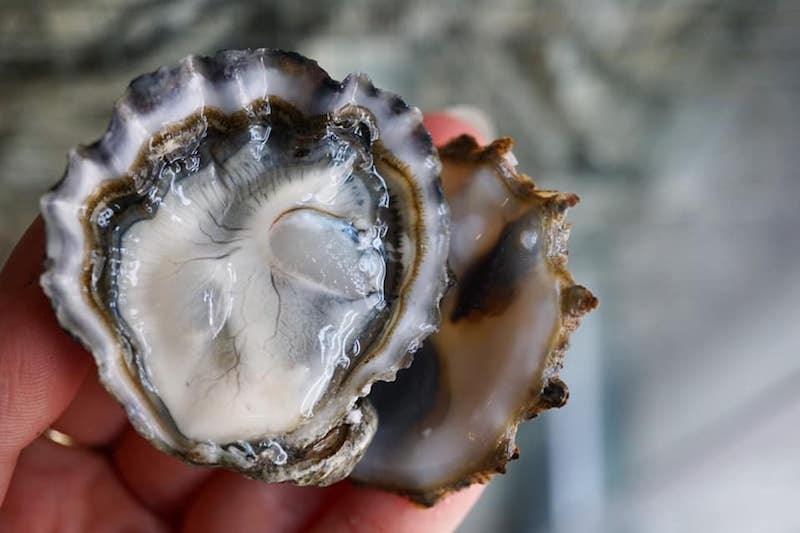 fanny-bay-oyster-bar-vancouver-bc
