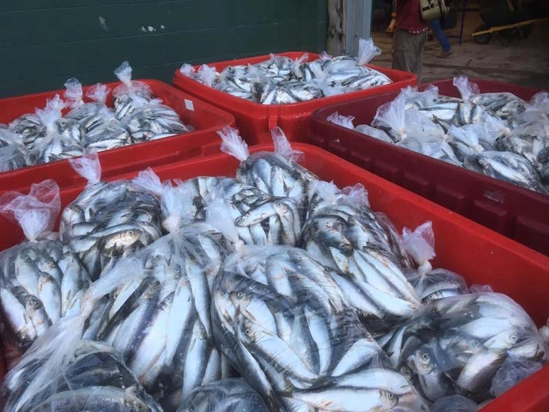 fishermen-helping-kids-with-cancer-herring-sale