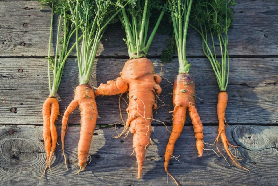 ugly-carrots-ubc-study-vancouver