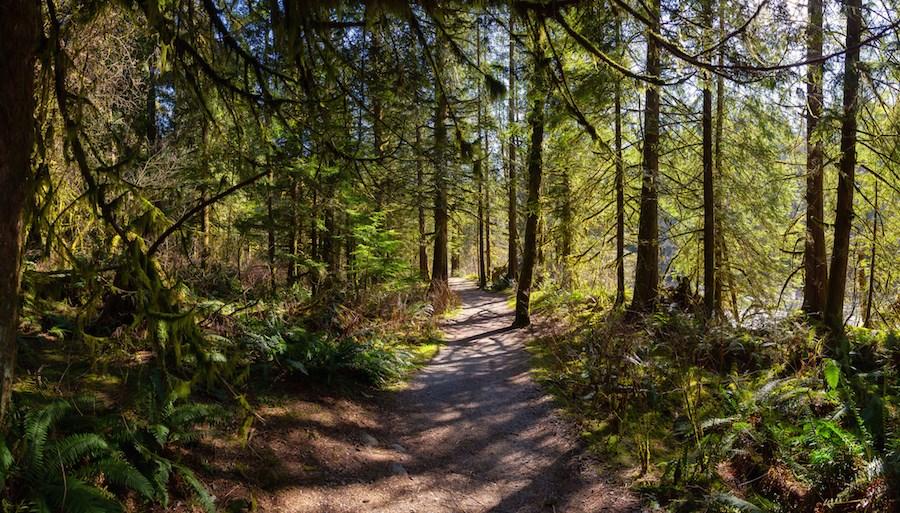 golden-ears-provincial-park-trail