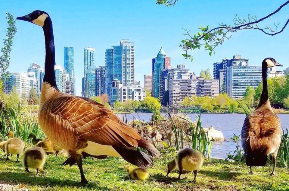goslings-vancouver-2019
