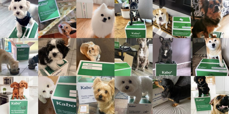 kabo-fresh-dog-food-delivery-canada