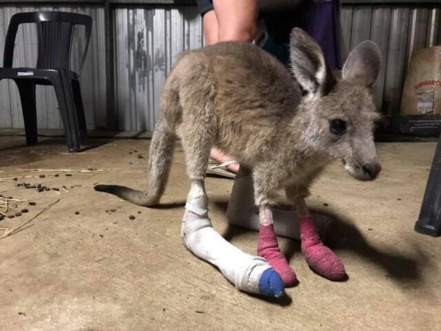 kangaroo_p3434490