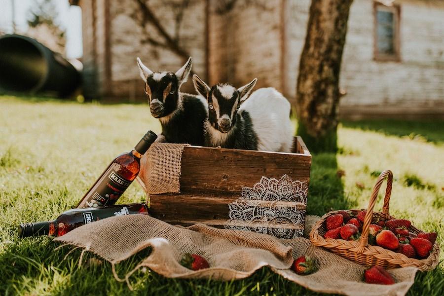 maan-farms-goats-wine-berries