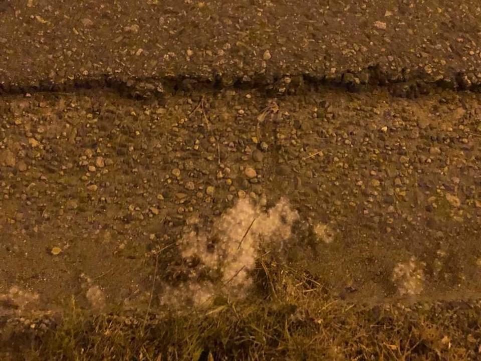 cottonwood-vancouver-ground