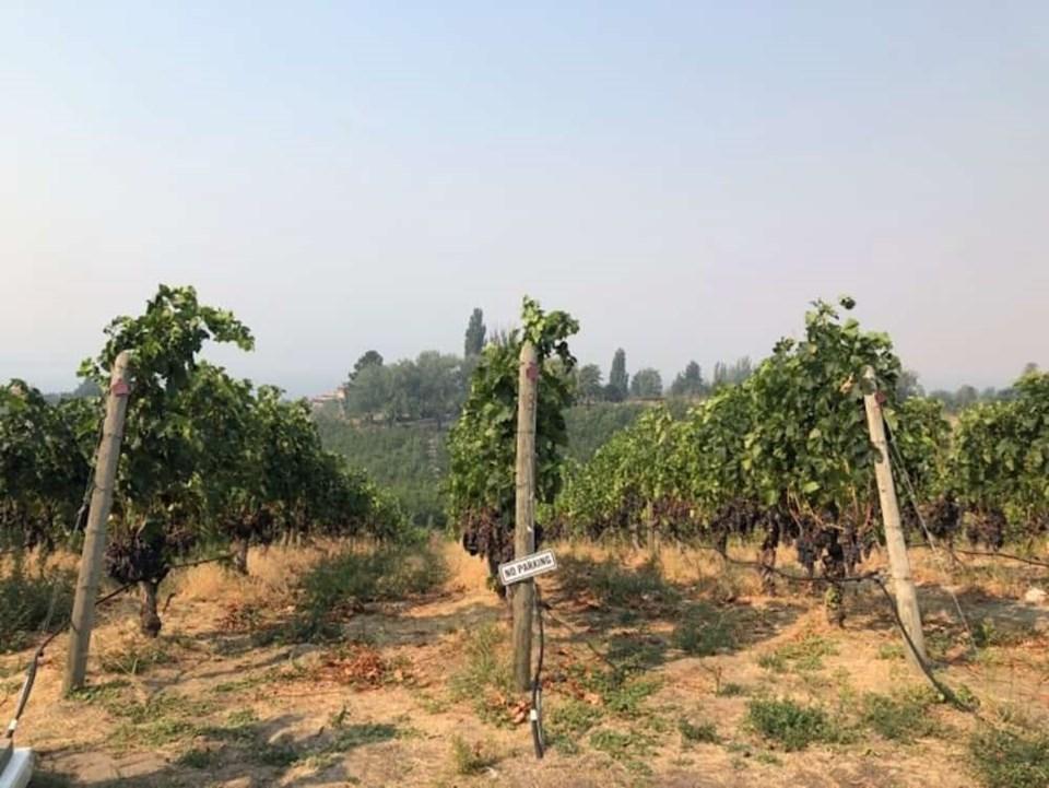 penticton-wineries