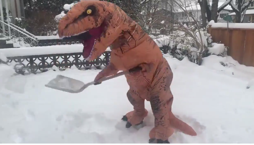 Bizarre, funny and dangerous things Vancouverites saw in the snow (PHOTOS & VIDEO)