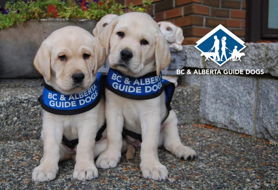 bc-alberta-guide-dogs