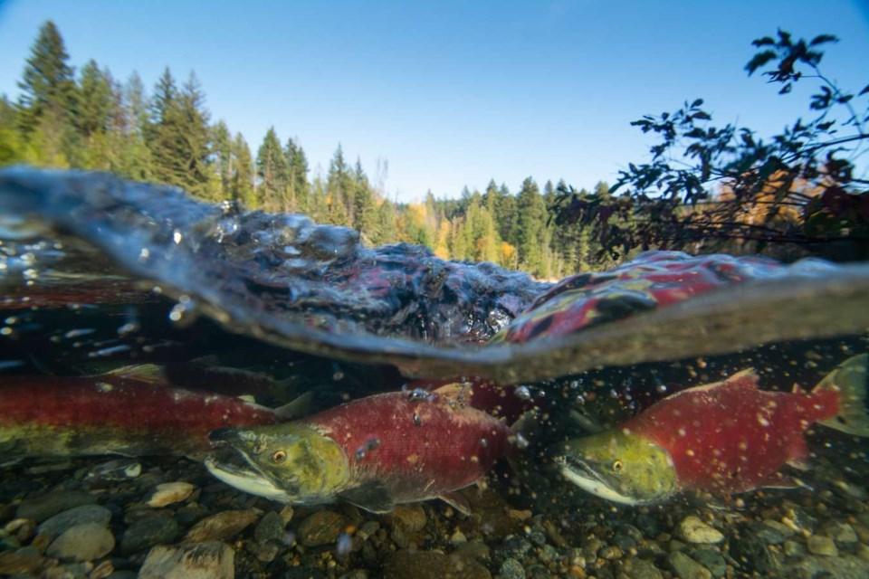 pacific-salmon-foundation