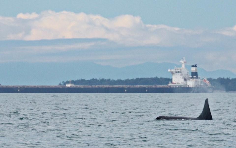 southern-resident-killer-whale-joan-lopez