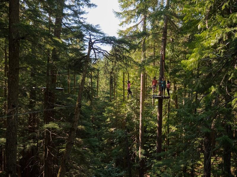 tag-whistler-treetop-adventure
