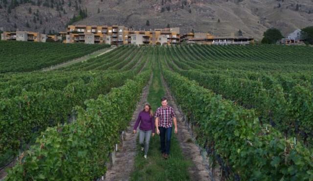 National Geographic filmmaker Bryan Smith BC winery NatGeo screen_shot_2020-10-18_at_1.10.23_pm_p3486210