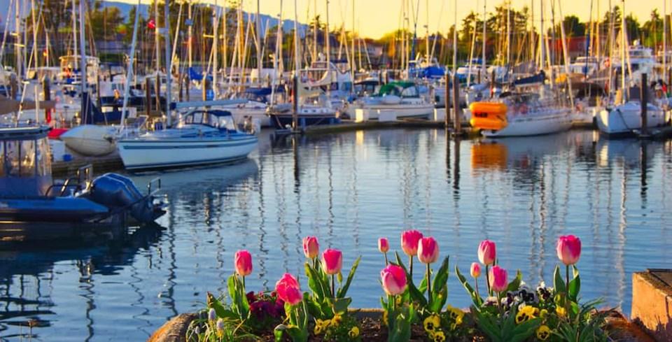 tulips-vancouver-island.jpg