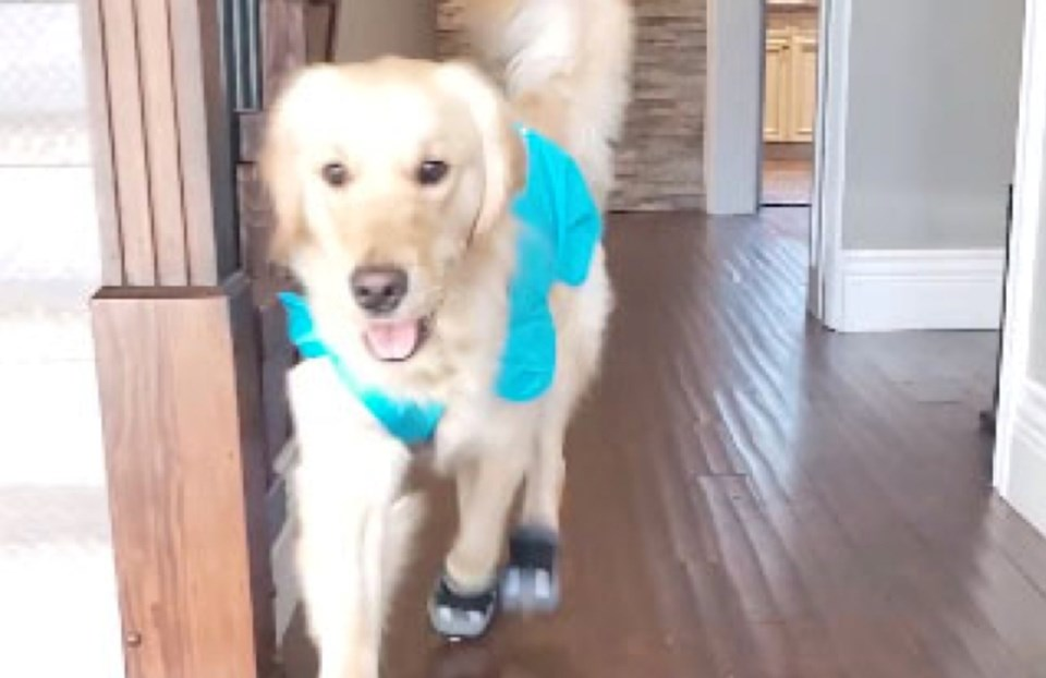 victim services dog booties