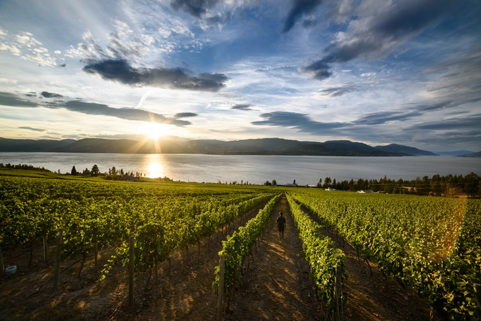 vineyard-destination-bc