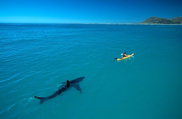 White Shark Kayak©Thomas Peschak