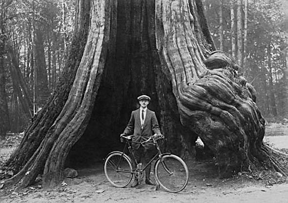 "1911 - James Bennett ""Ben"" Fyer stands with his bicycle at the Hollow Tree in Stanley Park."