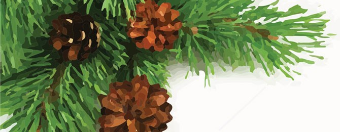 stock-photo-branch-of-christmas-tree-and-pine-cones-on-white-background-85545640_Cleaned_EmmaHeader