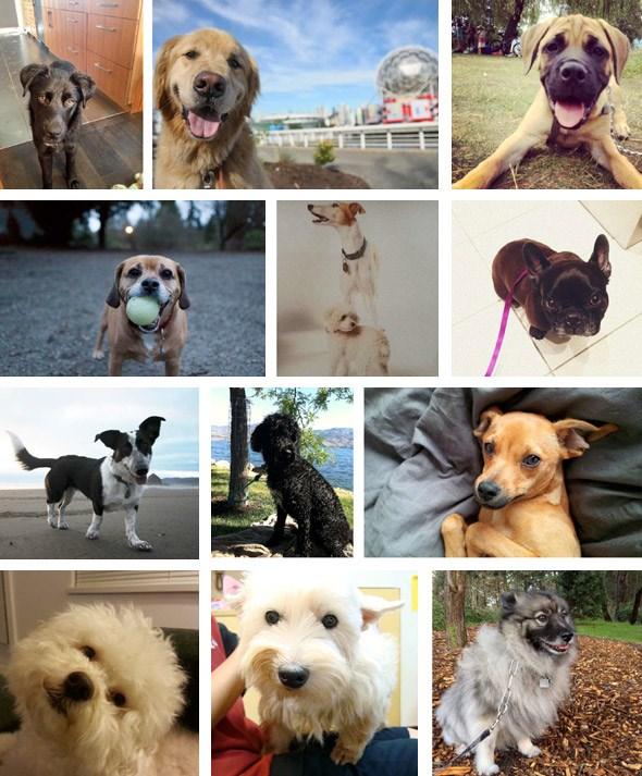 dogtown-vancouver