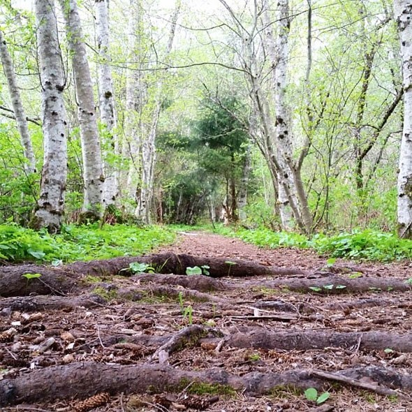 squamish-trail