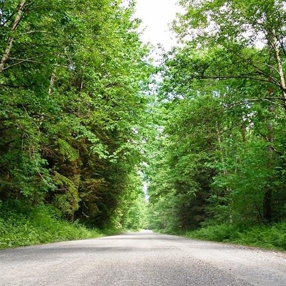 deer-lake-road
