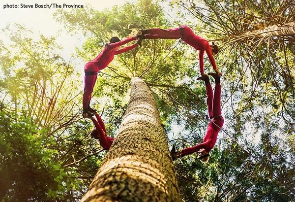 Aeriosa-poster-image-Tree-Dancing-via