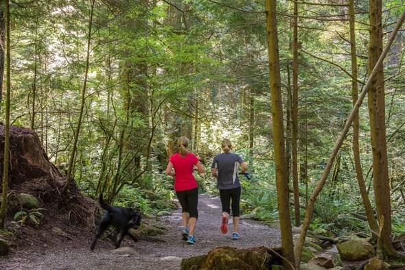 forest-run