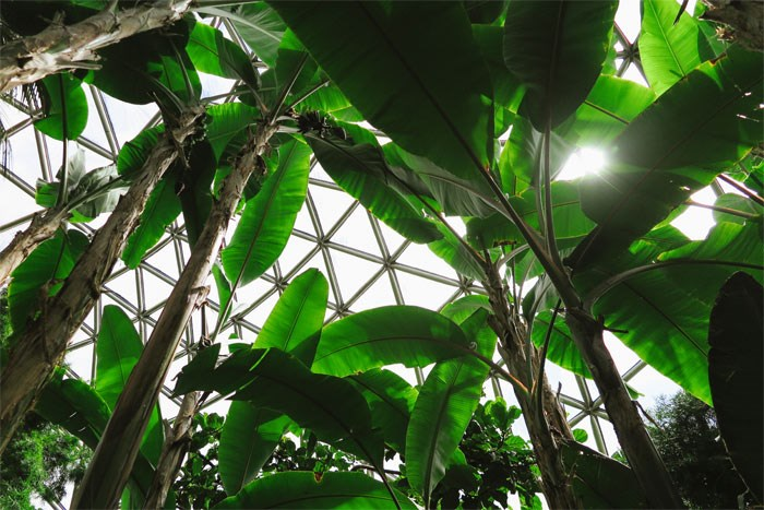 fieldandforest3