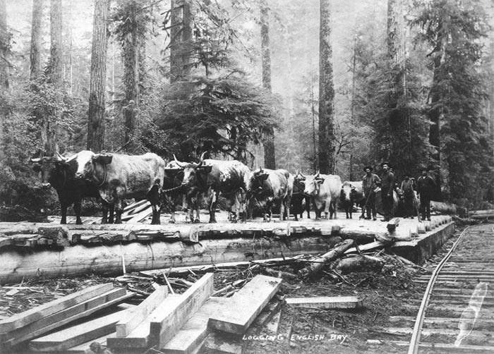 logging-english-bay