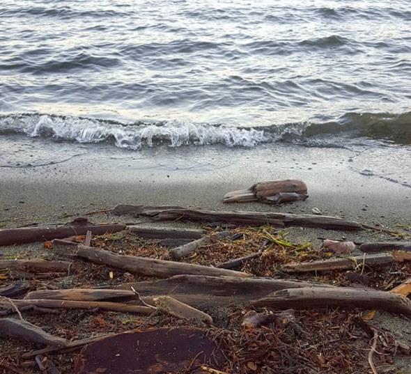 harrison-lake-shore