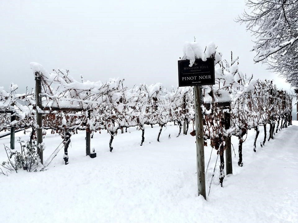 Photo courtesy: Mission Hill Winery