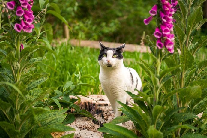 The mighty explorer of foxgloves patches.