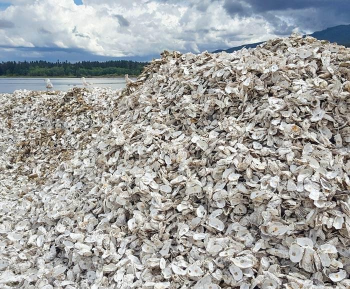 oyster-shells