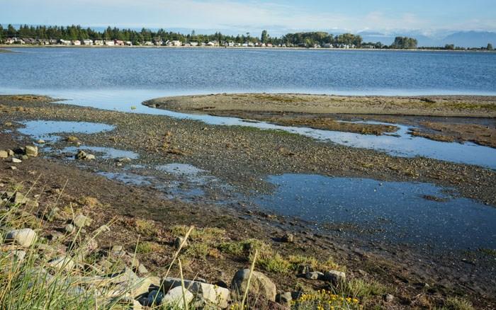 Boundary Bay from 12 Avenue Dyke Trail. Photo: Stephen Hui.