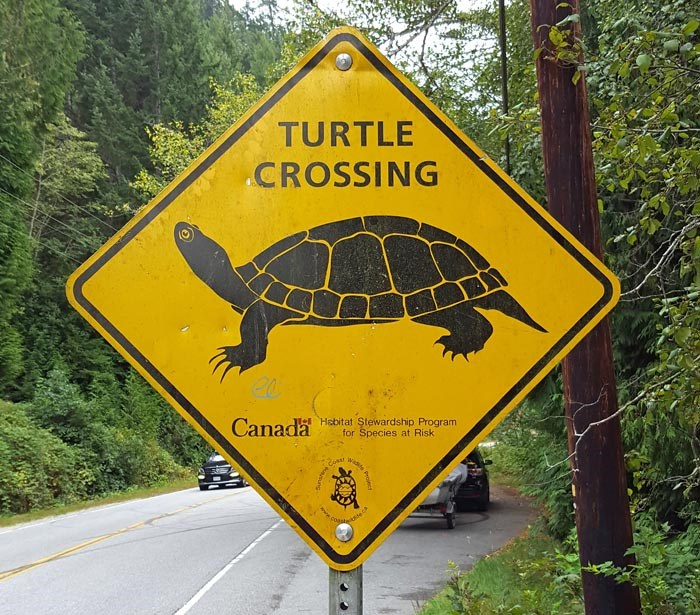 turtle-crossing-sign
