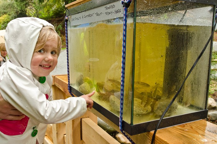 The PSF works to fund the Salmon in the Classroom program in BC