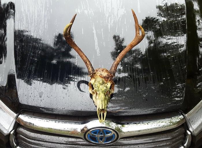 deer-skull-hood