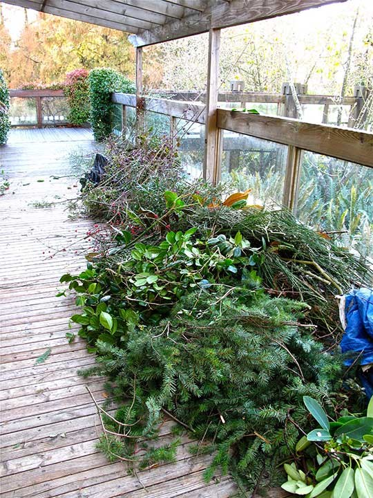 Raw Materials: Evergreens from the Garden are used in the making of wreaths