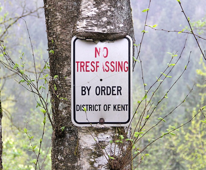 The tree is eating the sign