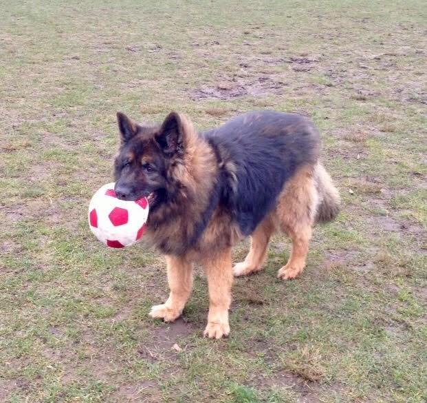 Roscoe mixed breed
