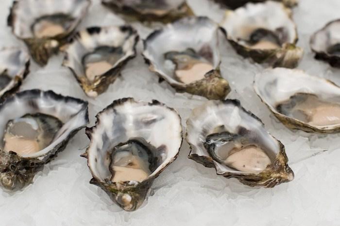 Oysters. Photo via Pixabay.